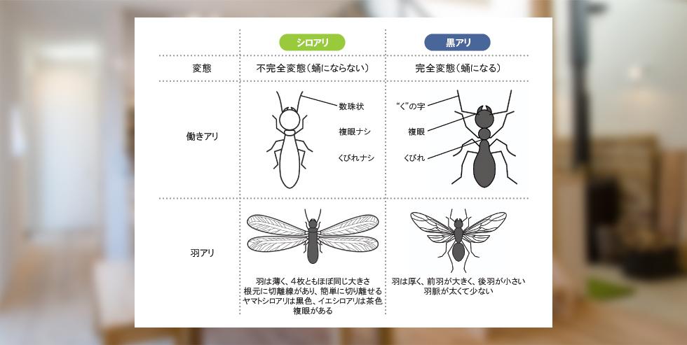 日本にはどんなシロアリが住んでいるのですか?