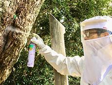 スズメバチ等 専用防護服にて処理